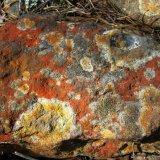 Jäkälöytynyt kivi